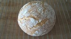 pan trigo sarraceno arroz sin gluten