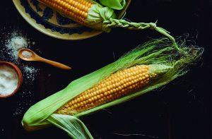 transgenicos maiz planta